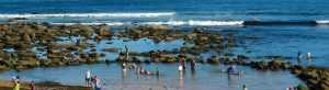 Copacabana Information describes the local rockpool which is a safe and enjoyable place for young children. It is one of the good Copacabana Attractions. Next to this pool is a high cliff which is excellent for whale watching.