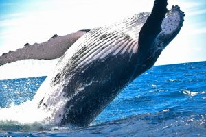 Use Copacabana Accommodation to see the migrating whales. Maybe you could also consider these to be Pet Friendly?